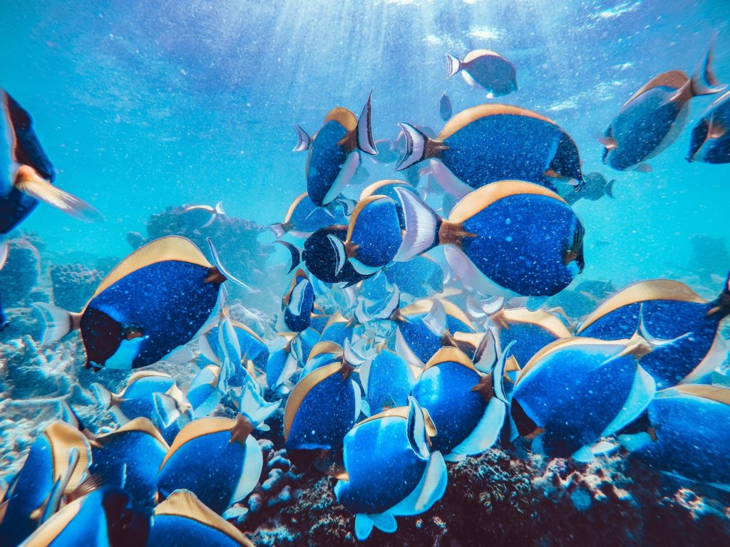 魚 日本一 一覧